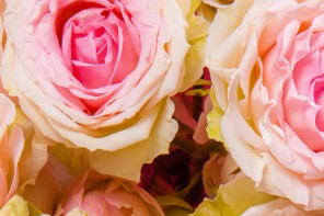 Rose: the perfumer's essential ingredient