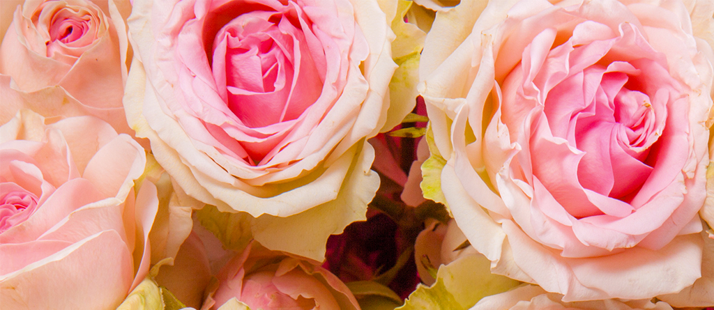 Discover the rose, the perfumer's essential ingredient.