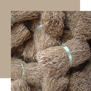 Vetiver root is an ingredient with a woody and green note, used in Carrément Belle fragrance alõ