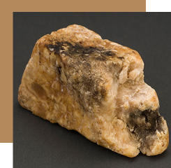 Ambergris is a raw material of animal origin from sperm whale concretion.