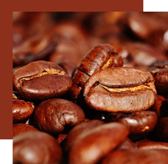 Coffee is used in perfumery thanks to its absolute that comes from roasted coffee beans