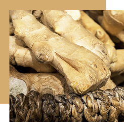 Ginger is a root whose spicy and peppery smell enters the compositions of our alo fragrance