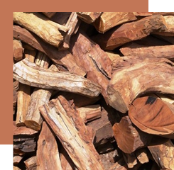 Sandalwood, whose essence is used in perfumery, has warm, woody tones and enriches the olfactory power of a perfume.