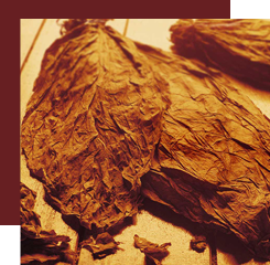 tobacco brings a facet that is both dry, hot and honeyed to a fragrance