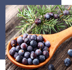 juniper berries are one of the ingredients of the eau de parfum alo