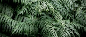 Ferns fragrances are elegant and timeless, and are no longer only for men