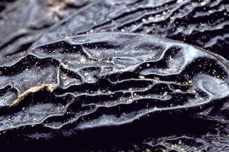 the tonka bean is an ingredient with multiple olfactory facets, widely used in perfumes