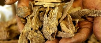 oud wood is a rare and mysterious ingredient with warm and woody scents